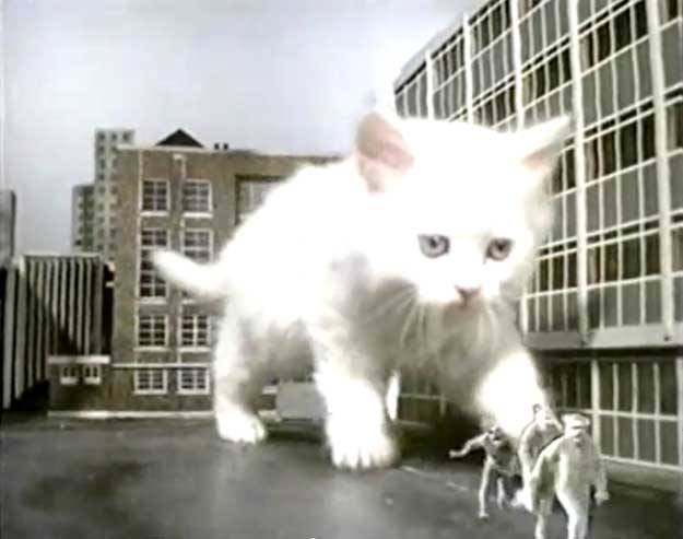 Large white cat chases psychologists away